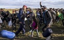 1.300 người Mỹ kiến nghị chính phủ tiếp nhận người tị nạn