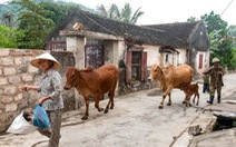 Mộc mạc đường làng cổ Đông Sơn