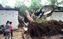 Cây xanh đổ đè sập căntin Cung văn hóa Lao động TP.HCM
