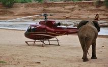 Google giúp bảo vệ voi ở Kenya