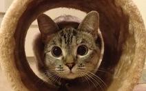 """Nàng mèo bị bỏ rơi thành """"sao"""" trên mạng"""