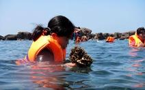 San hô Phú Quốc đang lụi tàn