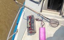 Truy quét bắt nhiều ghe chích cá trên sông Sài Gòn