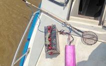 Truy quét nạn chích cá trên sông Sài Gòn