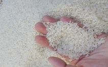 Dẻo thơm gạo tám Hải Hậu