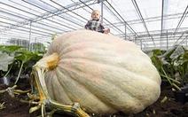 Bí ngô khổng lồ 850kg phá kỷ lục của Anh