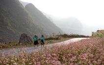 Khám phá lễ hội hoa tam giác mạch đầu tiên ở Hà Giang