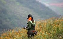 Có một mùa hoa cúc ở Đồng Văn