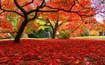 Westonbirt Arboretum -thiên đường mùa thu nước Anh