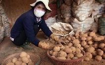 Lý do cấm khoai tây Trung Quốc vào chợ nông sản Đà Lạt