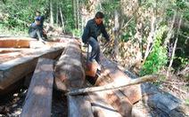 Băm chặt rừng Tây nguyên