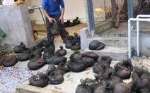 Quy định không rõ ràng, hơn 30 con tê tê chết oan