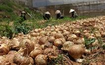 Liên kết tiêu thụ nông sản có tỉ lệ thành công thấp