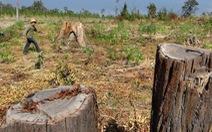 Xâu xé đất nông lâm trường, trách nhiệm ở đâu?
