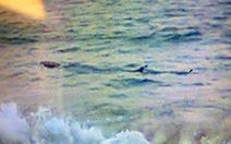 Cá 4m lởn vởn bãi biển Tuy Hòa, đừng dại ra tắm