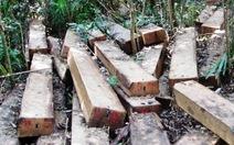 Tạm đình chỉ phó công an xã bán gỗ cho lâm tặc