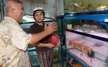 Xuất khẩu cá cảnh chưa xứng tiềm năng
