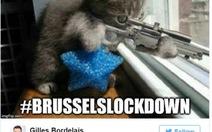 Mèo hiệp sĩ chống khủng bốngập tràn Twitter