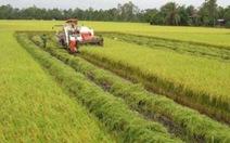 Thương lái thu gom gạo xuất khẩu, chỉ số giá lương thực tăng 0,31%