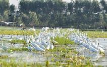 Láng Sen là khu Ramsar thứ 7 của Việt Nam