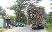 """Giám đốc sở giao thông vận tải đi """"bắt"""" xe quá tải"""