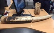 Hai người Việt bị bắt giữ ở Pháp vì buôn lậu ngà voi