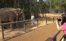 Khai trương vườn thú bán hoang dã tại Phú Quốc