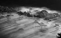 Đà Lạt trắng và đen: Chuyện của phố