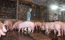 Nhập khẩu thức ăn gia súc từ Trung Quốc tăng mạnh