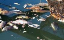 Chính quyền hỗ trợ dân kiện doanh nghiệp vụ cá bè chết