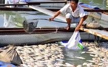 Cảnh sát môi trường vào cuộc vụ cá chết hàng loạt ở Đồng Nai
