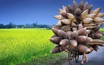 Ảnh đẹp du lịch Việt vào Top 37 ảnh xuất sắc nhất năm 2015