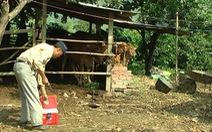 Đắk Lắk lập chốt ngăn chặn dịch lở mồm long móng
