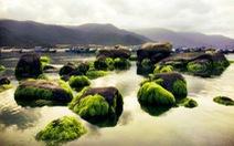 Mùa rêu đá đang hiện lên đẹp đến nghẹt thở