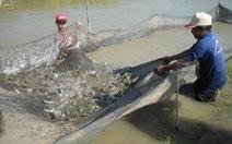 Quy hoạch nuôi tôm nước lợ vùng Đồng bằng sông Cửu Long