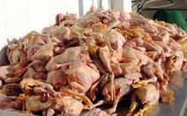 Nhà xe Mai Lan 7 lần chở gà chết về miền Tây tiêu thụ