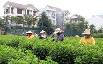 """Mượn đất """"treo' trồng hoa tết"""