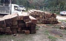 Quảng Namphát hiện 90 phách gỗ kết bè dưới sông