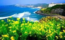 """Người Việt """"biến mất"""" ở Jeju: cảnh sát truy lùng 1 người Hàn"""