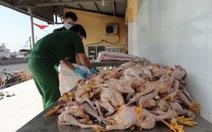 Phạt nhà xe 7 lần chở gà chết hơn 7 triệu đồng