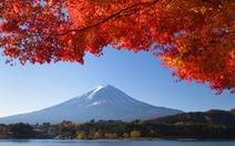Leo núi, ngắm hoa anh đào từ phim Sắc màu Nhật Bản