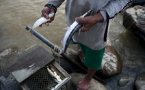 Con người bắt cá nhiều, khai báo ít