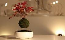 Kỳ thú bonsai bay lơ lửng trên không
