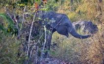 Tổ chức Động vật châu Á giúp bảo tồn voi tại Đắk Lắk