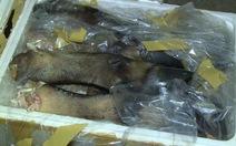 Chở 600kg chân trâu bò thối, phạt 3,5 triệu đồng