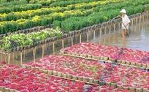 Chợ Lách tiêu thụ khoảng 1,5 triệu sản phẩm hoa kiểng tết