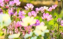 Toàn cảnh làng hoa Sa Đéc tết Bính Thân 2016