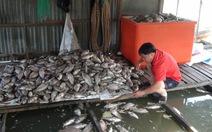 Cá chết hàng loạt do nước nhiễm hóa chất