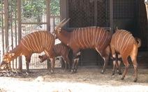 Vinpearl Safari phủ nhận thông tin cả ngàn thú quý hiếm chết