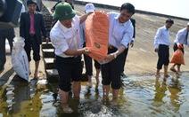 Thả 50.000 con cá giống xuống hồ thủy điện Sông Tranh 2